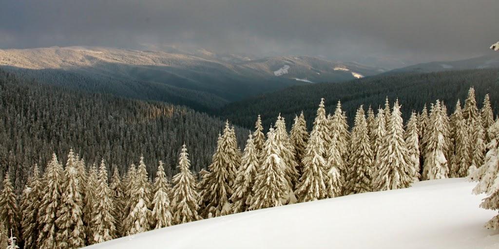 zăpadă Lăcăuți Covasna schi munte brazi