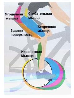 езда на велосипеде мышцы