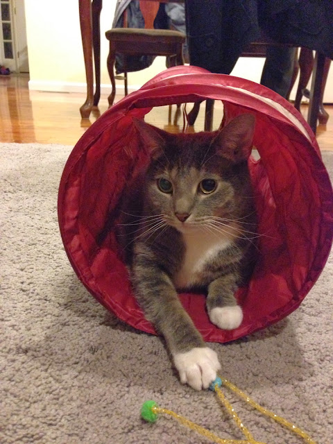 Cat Tunnel Time