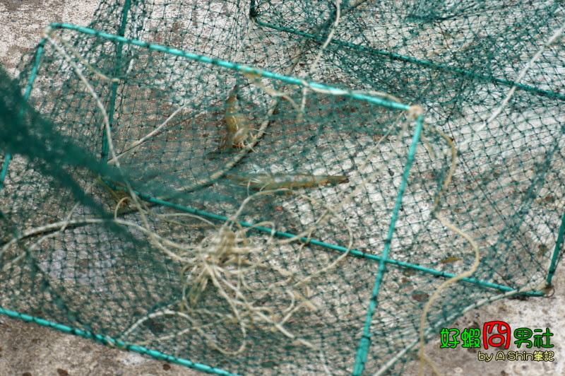 兩隻蝦子是有點小失落~ 好蝦冏男社