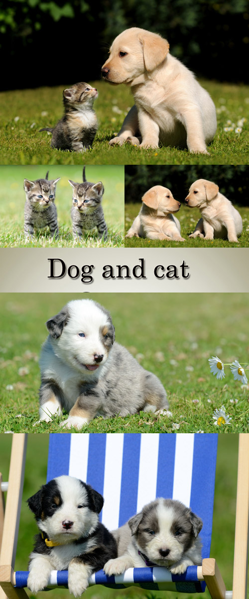 Stock Photo: Puppies and kittens on a green grass
