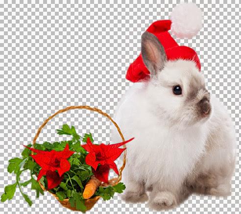Grace's_TLC_Hopping Christmas.jpg