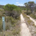 Arrow marker beside service trail (103555)