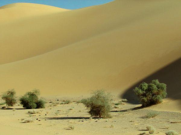 Отдых в Тунисе - экскурсия в Сахару