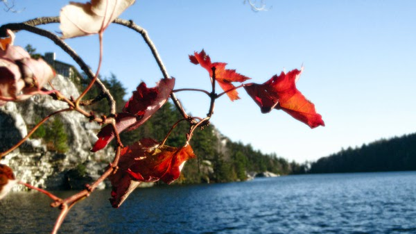 Leaves over Lake Minnewaska