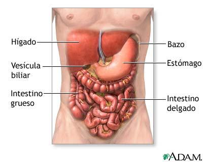 abdomen lleno sensación frecuente micción heces sueltas