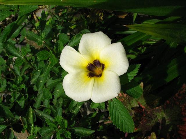 Из зимы в лето. Филиппины 2011 - Страница 4 IMG_0014%252520%2525283%252529