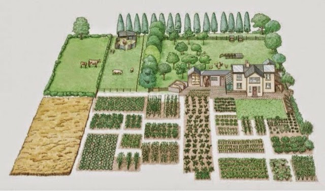 How To Turn 1 Acre as Self Sustaining Homestead