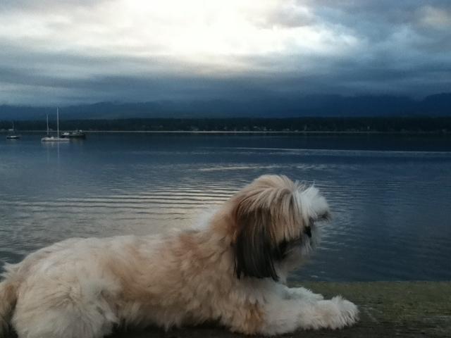 Zoey dog at marina at sunset