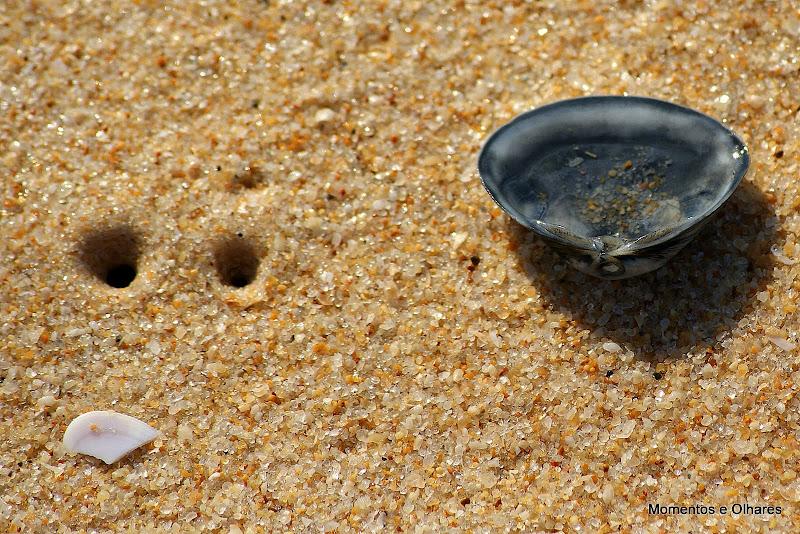 Uma concha na areia da praia