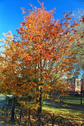 Irkutsk autumn trees Russia