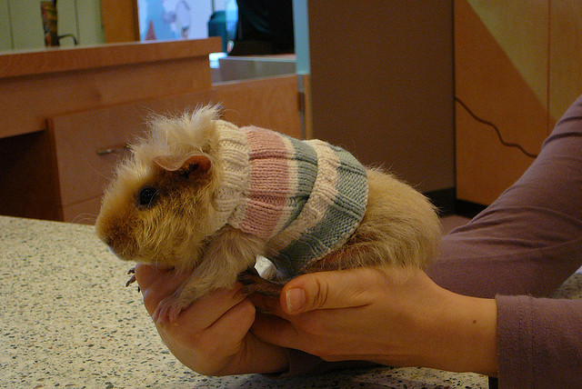 What NOT to Knit: Crazy Pet Knitting
