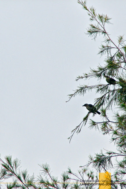 Some More Birds at Olango Island Wildlife Sanctuary in Cebu