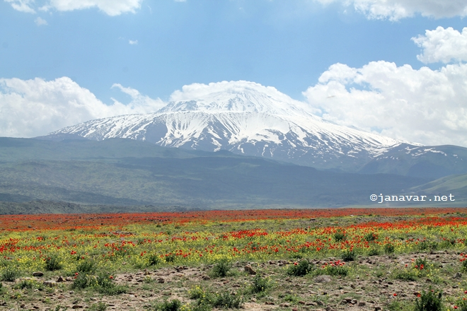 Steppe and Mount Ararat, Turkey