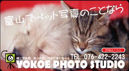 富山ペット写真
