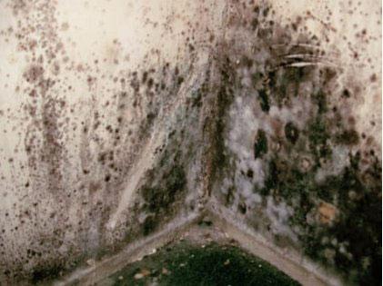 Do que tratar um fungo de pregos que estão em gv