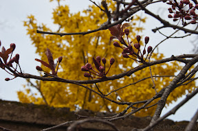 spring, flowers, blossoms, tree, DC, Frederick