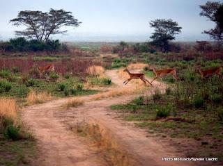 Une vue du parc national des Virungas située dans la province du Nord-Kivu dans l'est de la RDC.