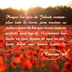 2 Crónicas 16.9
