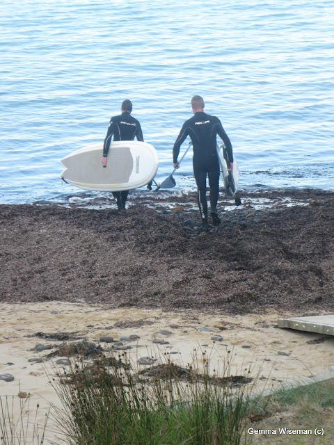 Mornington Peninsula Beaches And Dogs Rules