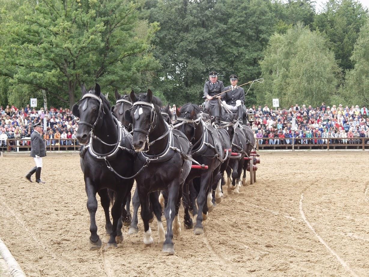Mehrspänner bei der Hengstparade Moritzburg bei Dresden