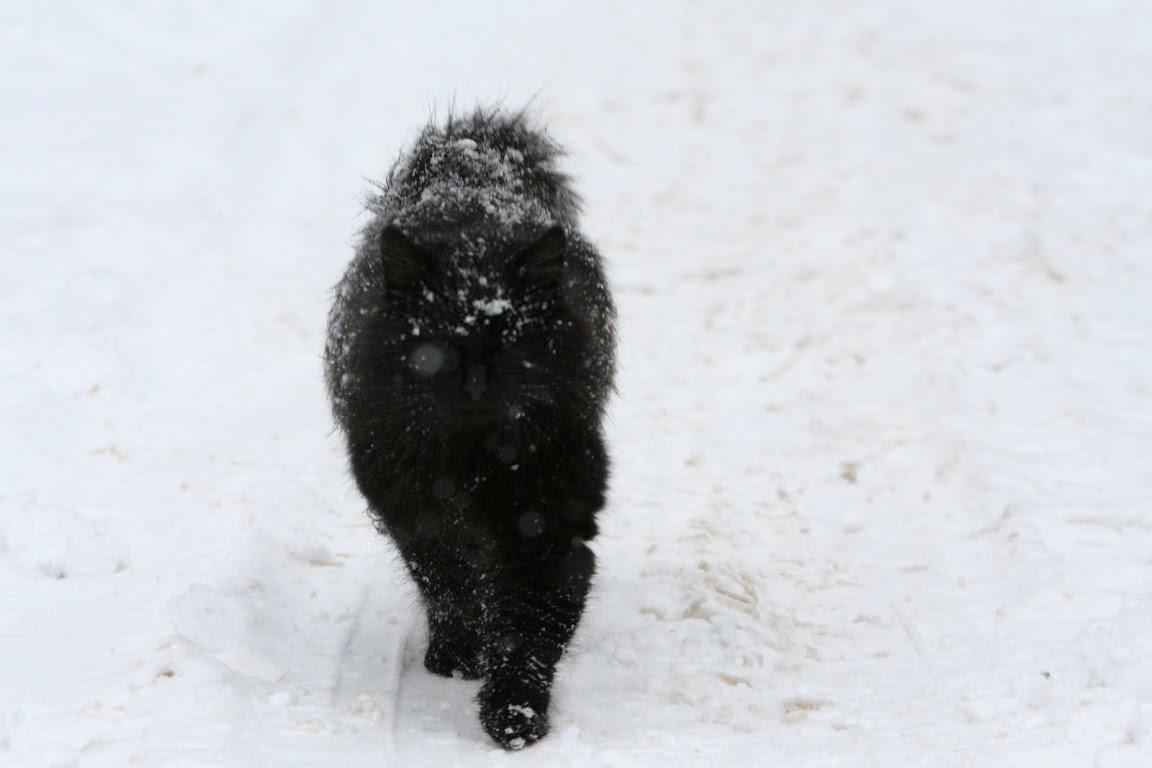 снег, Пушкин, снег