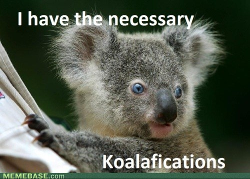 internet-memes-be-a-koala1.jpeg
