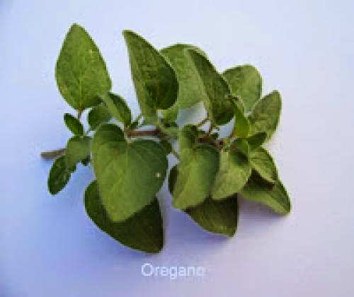 Herbs Of The Monthoregano