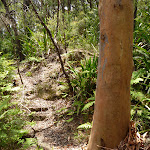 Pleasant forest west of Tooheys Rd (447032)