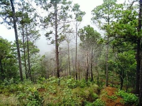 Naturaleza en La Montañona