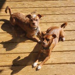 Leah Walters