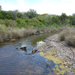 Pinney's creek in the Wallarah Pennisula (388181)