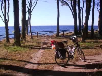 Bäume am Meer bei Heiligendamm, Mecklenburg-Vorpommern