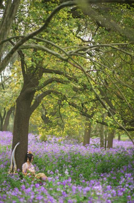 Nữ hiệp Minh Giáo du ngoạn trong rừng hoa - Ảnh 1