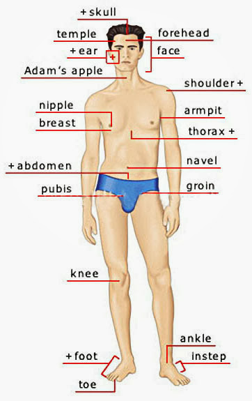 Parts Of Mans Body 49