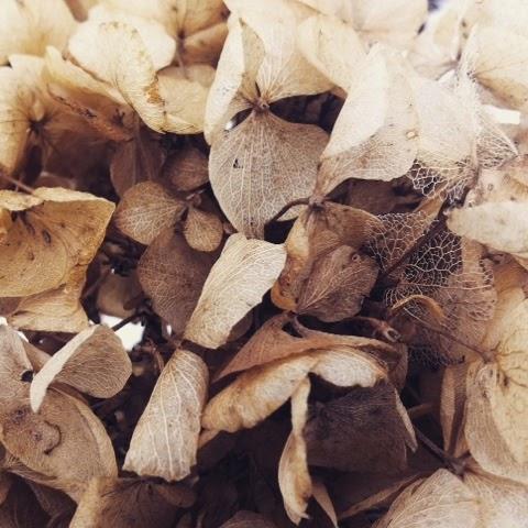 dried flowers, winter time, nature, Limousin, creuse, de tout coeur limousin,