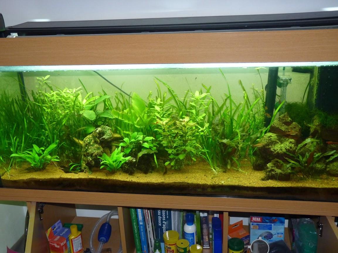Ma petit histoire Aquariophile de 2009 à aujourd'hui  P1030641