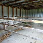 Inside Bullocks Hut stable (295245)