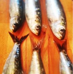 Nathan Outlaw Fish Kitchen Menu