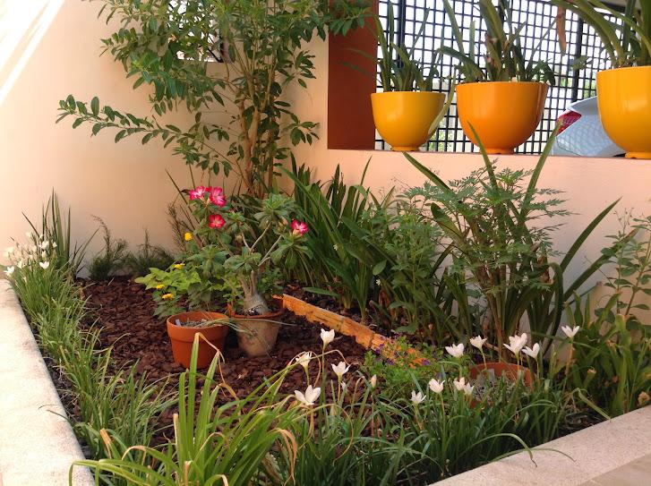 Nuestros jardines y sus flores p gina 108 for Jardines para el frente de mi casa
