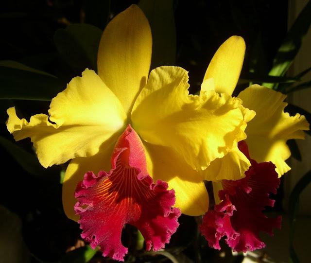 Растения из Тюмени. Краткий обзор - Страница 9 BLC%252520Alma1