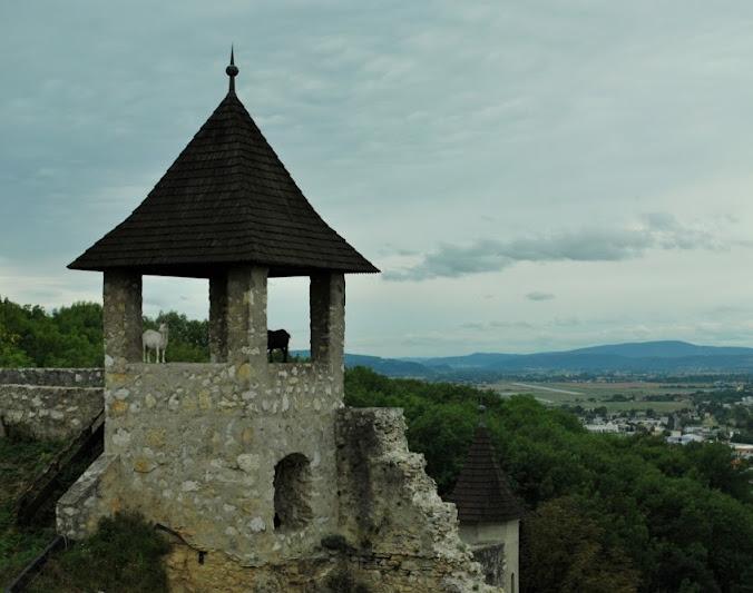 cabras que también viajan a Eslovaquia