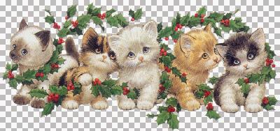 kittens1xmas-ve.jpg