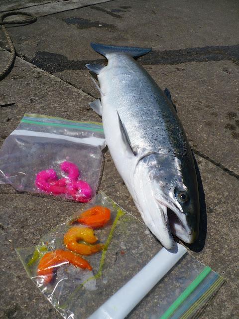 Summer Run Skamania Steelhead Fishing