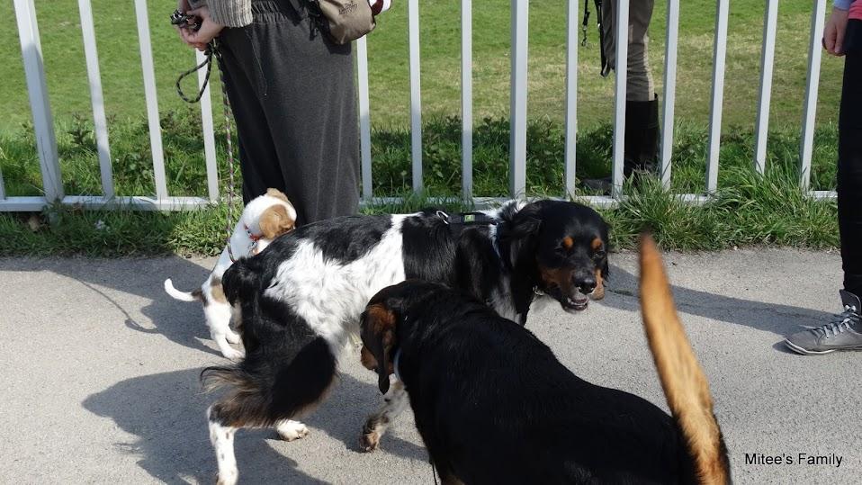 Balades canines en Nord (59)/Pas de Calais (62) - Boulogne-sur-Mer, Calais et Lille - Page 4 DSC01805
