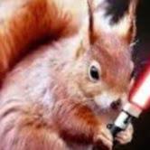 Darth Squirrel