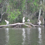 Birds at the Bombah Broadwater