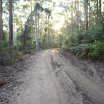 Georges Road Watasgans National Park (361034)