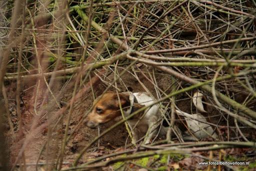vossenjacht in de Bossen van overloon 18-02-2012 (62).JPG