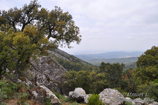 Canuto del Montero